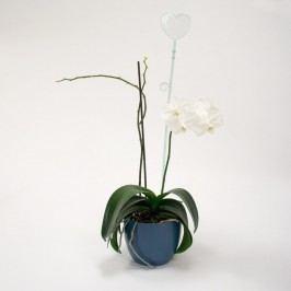 Orchidea pálca, szív, üveg, 2 db