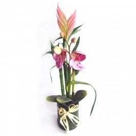 Művirág orchidea és bambusz kompozíció
