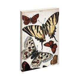 Biologica Butterfly jegyzetfüzet - Jay
