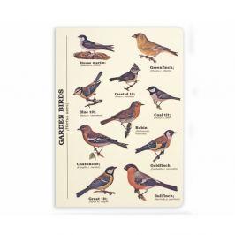 Garden Birds jegyzetfüzet, A5 méret - Gift Republic